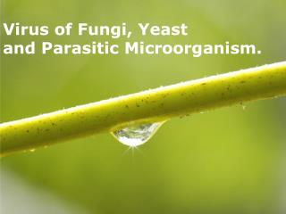 Virus of Fungi, Yeast  and Parasitic Microorganism.