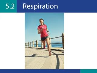 Exercise 7: Respiration