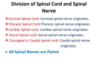 Division of Spinal Cord and Spinal Nerve