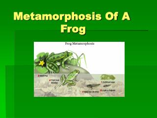 Metamorphosis Of A       Frog
