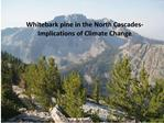 Whitebark pine in the face of Climate Change