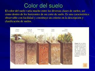 Color del suelo El color del suelo var a mucho entre las diversas clases de suelos, as  como dentro de los horizontes de