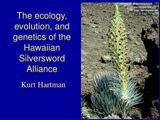 The ecology, evolution, and genetics of the Hawaiian Silversword Alliance
