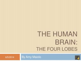 The Human Brain: The four Lobes