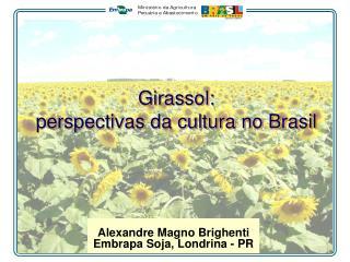 Girassol:  perspectivas da cultura no Brasil