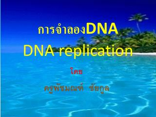 DNA DNA replication