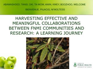 HARVESTING EFFECTIVE AND MEANINGFUL COLLABORATIONS BETWEEN FNMI COMMUNITIES AND RESEARCH: A LEARNING JOURNEY