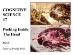 COGNITIVE   SCIENCE          17  Peeking Inside   The Head              Part 1    Jaime A. Pineda, Ph.D.