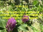 TRANSLEG  Using translational genomics to  underpin germplasm improvement for  complex traits in crop legumes