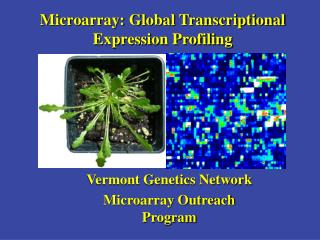 Microarray: Global Transcriptional Expression Profiling