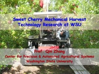 Sweet Cherry Mechanical Harvest Technology Research at WSU