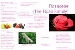Rosaceae The Rose Family
