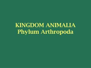 KINGDOM ANIMALIA Phylum Arthropoda