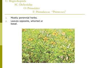 C: Magnoliopsida  SC: Delleniidae   O: Primulales    F: Primulaceae   Primroses