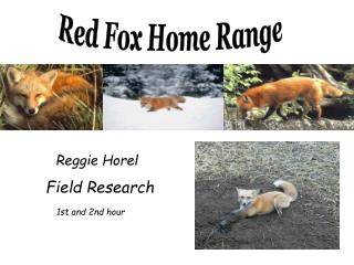 Red Fox Home Range