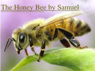 The Honey Bee by Samuel