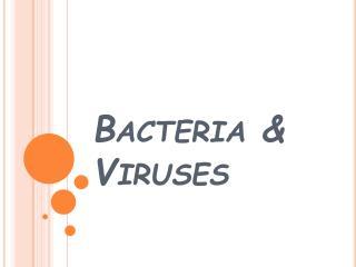 Bacteria  Viruses
