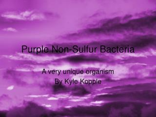 Purple Non-Sulfur Bacteria