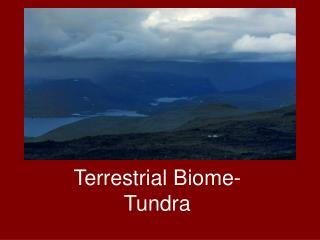 Tundra-Terrestrial Biome