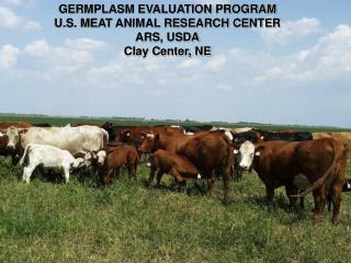 GERMPLASM EVALUATION PROGRAM U.S. MEAT ANIMAL RESEARCH CENTER ARS, USDA Clay Center, NE