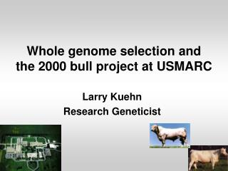 Whole genome selection and the 2000 bull project at USMARC