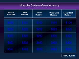 Muscular System- Gross Anatomy