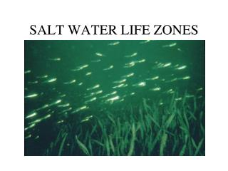 SALT WATER LIFE ZONES
