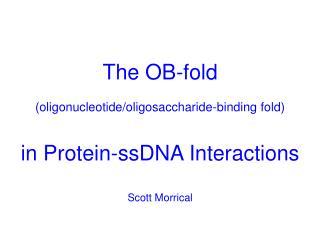 The OB-fold  oligonucleotide