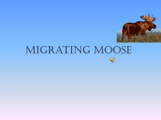 Migrating moose