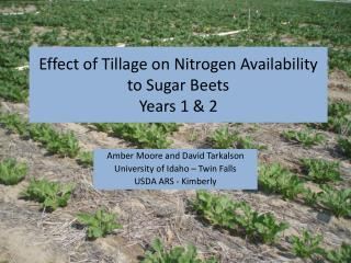 Effect of Tillage on Nitrogen Availability to Sugar Beets Years 1  2