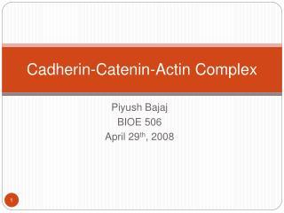 Cadherin-Catenin-Actin Complex