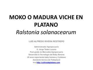 MOKO O MADURA VICHE EN PLATANO  Ralstonia solanacearum