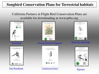 Songbird Conservation Plans for Terrestrial habitats