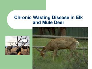 Chronic Wasting Disease in Elk and Mule Deer
