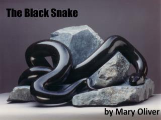 The Black Snake