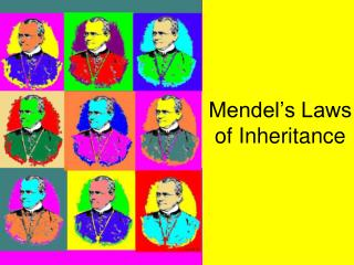 Mendel s Laws of Inheritance