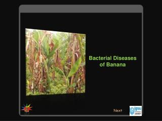 Bacterial Diseases of Banana