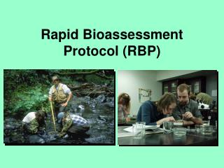 Rapid Bioassessment Protocol RBP