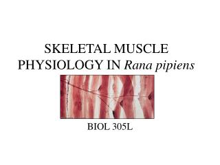 SKELETAL MUSCLE PHYSIOLOGY IN Rana pipiens