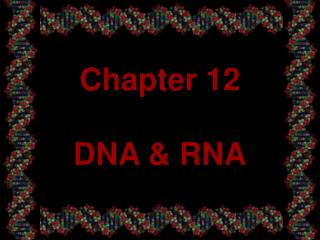 Chapter 12  DNA  RNA