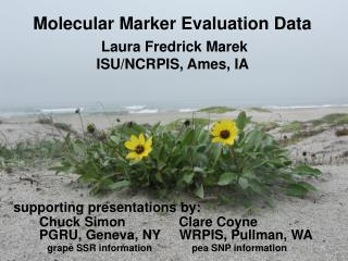 Molecular Marker Evaluation Data
