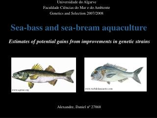 Sea-bass and sea-bream aquaculture   Estimates of potential gains from improvements in genetic strains