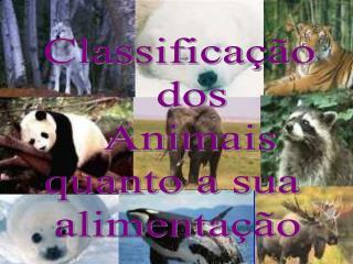 Classifica  o      dos       Animais  quanto a sua  alimenta  o