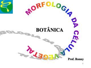 MORFOLOGIA DA C LULA VEGETAL