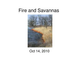 Fire and Savannas