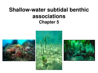 Shallow-water subtidal benthic associations Chapter 5