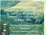 CONSERVANDO LOS RECURSOS NATURALES CON EL CULTIVO DE BAMB  SE GARANTIZA SEGURIDAD ALIMENTARIA
