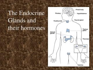 The Endocrine  Glands and  their hormones