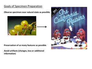 Goals of Specimen Preparation  Observe specimen near natural state as possible.            Preservation of as many featu