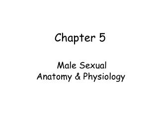 Chapter 5     Male Sexual           Anatomy  Physiology
